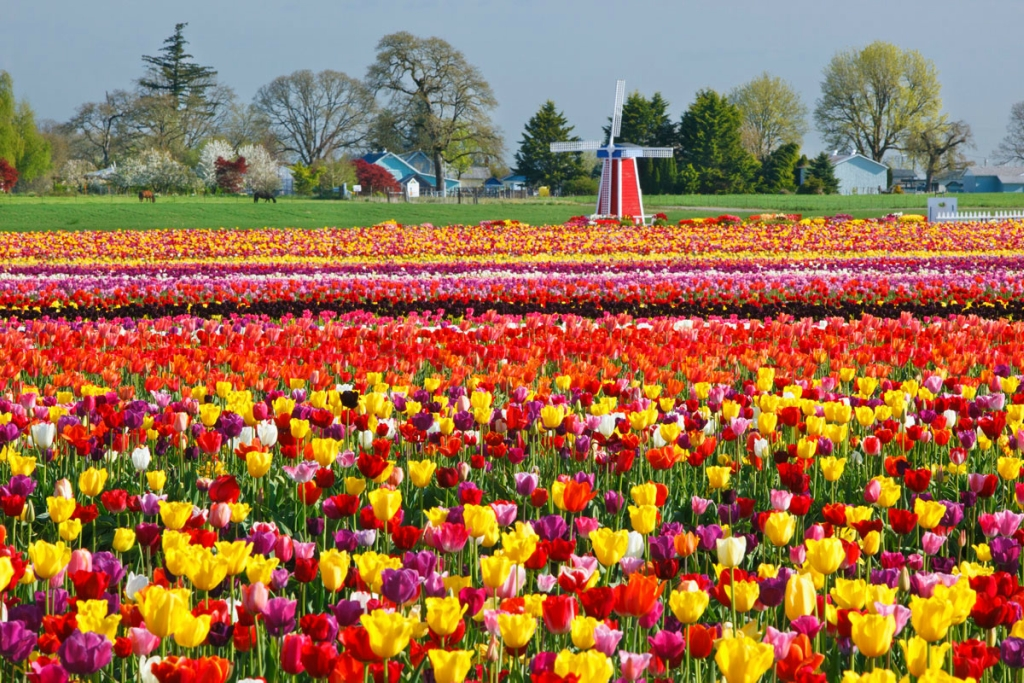 I colori della primavera for Immagini desktop primavera
