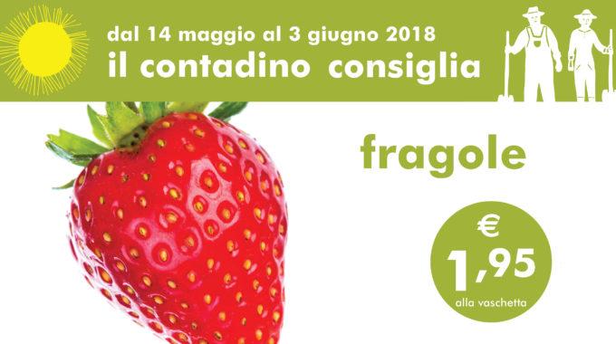 Promozioni Ortofrutta Fragole 02